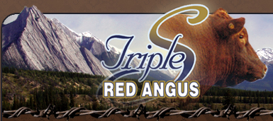 Triple S Red Angus